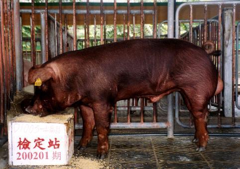 中央畜產會200201期D1005-04拍賣照片