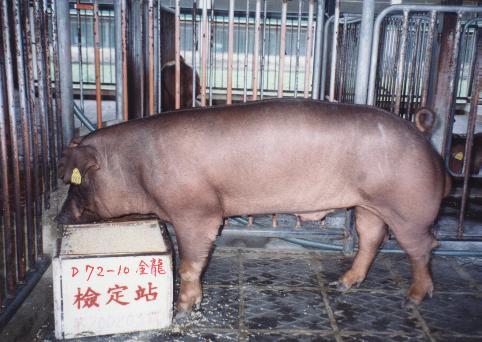 中央畜產會200203期D0072-10拍賣照片