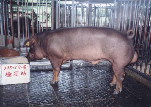 中央畜產會200203期D0135-05拍賣照片
