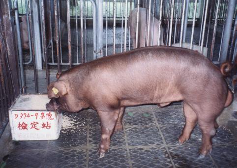中央畜產會200203期D0374-09拍賣照片