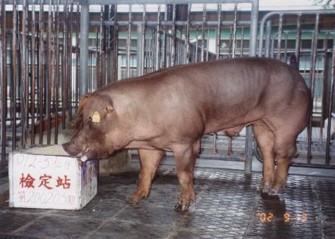 中央畜產會200205期D0012-05拍賣照片