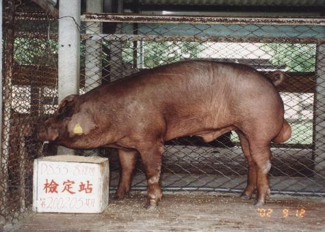 中央畜產會200205期D0855-08拍賣照片
