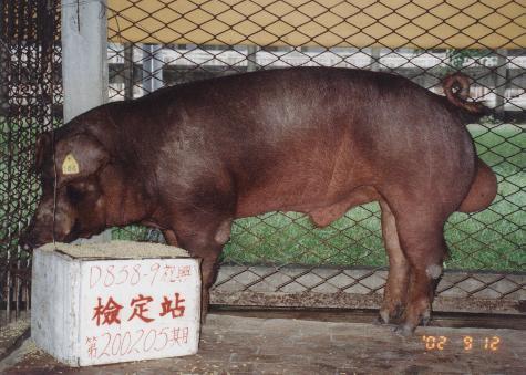中央畜產會200205期D0858-09拍賣照片