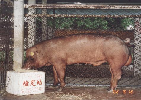 中央畜產會200205期D1166-05拍賣照片