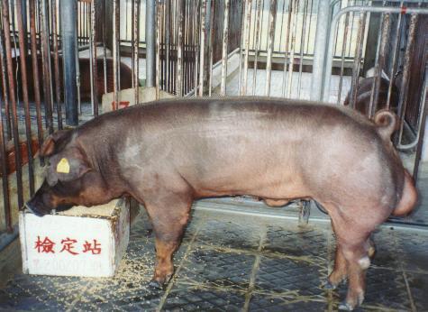 中央畜產會200207期D0195-03拍賣照片