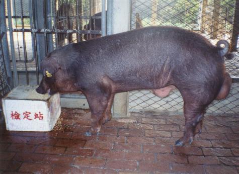 中央畜產會200207期D0219-03拍賣照片