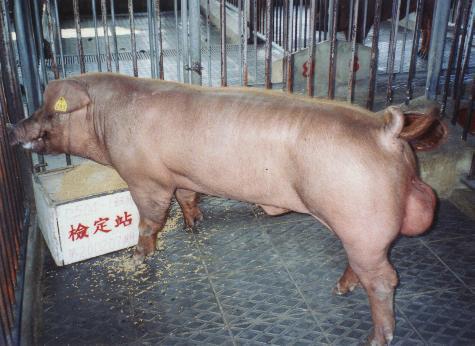 中央畜產會200207期D0504-01拍賣照片