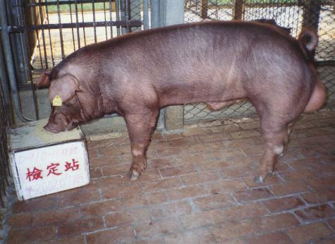 中央畜產會200207期D0910-11拍賣照片