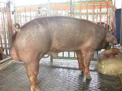 中央畜產會200207期D0916-10體型-全身相片