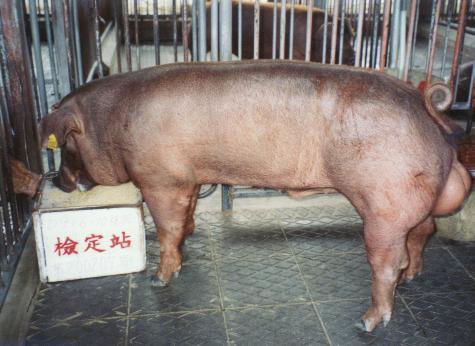 中央畜產會200207期D0916-10拍賣照片