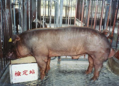 中央畜產會200207期D1016-03拍賣照片