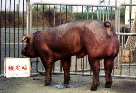 中央畜產會200209期D0045-07拍賣照片