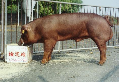 中央畜產會200209期D0082-05拍賣照片