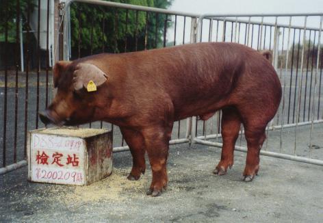中央畜產會200209期D0088-04拍賣照片