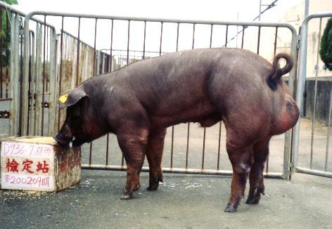 中央畜產會200209期D0936-07拍賣照片