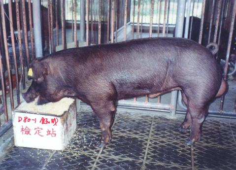 中央畜產會200211期D0080-01拍賣照片