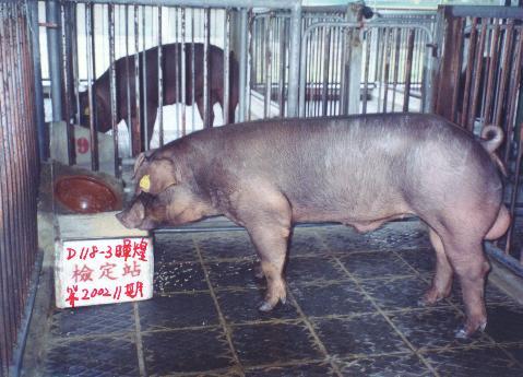 中央畜產會200211期D0118-03拍賣照片