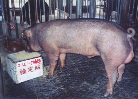 中央畜產會200211期D0121-05拍賣照片