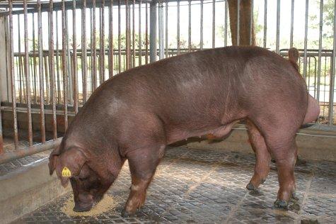 中央畜產會200211期D0943-06體型-全身相片