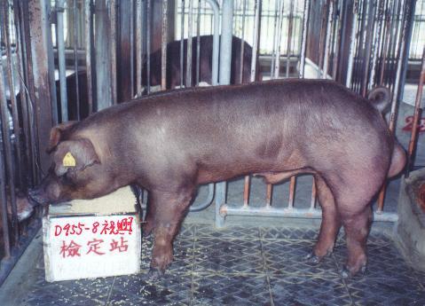 中央畜產會200211期D0955-08拍賣照片