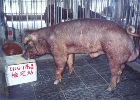 中央畜產會200211期D1025-01拍賣照片