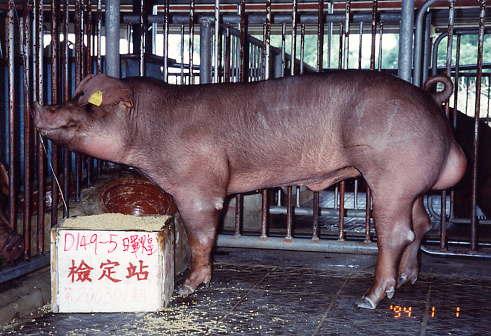 中央畜產會200301期D0149-05拍賣照片