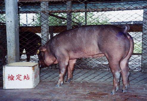 中央畜產會200301期D0292-07拍賣照片