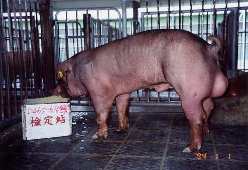 中央畜產會200301期D0465-06拍賣照片