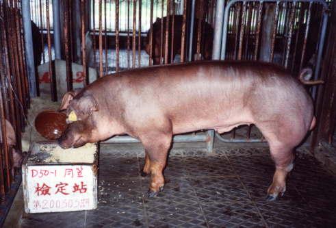 中央畜產會200303期D0050-01拍賣照片