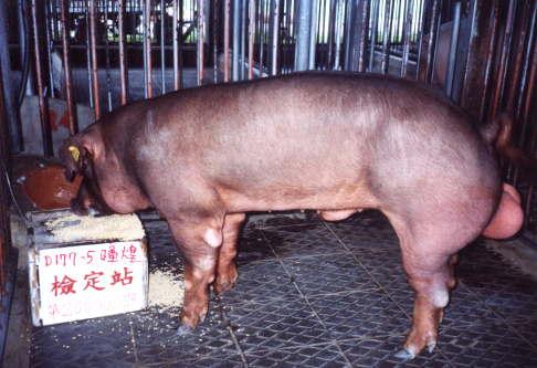 中央畜產會200303期D0177-05拍賣照片