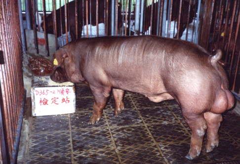 中央畜產會200303期D0365-02拍賣照片