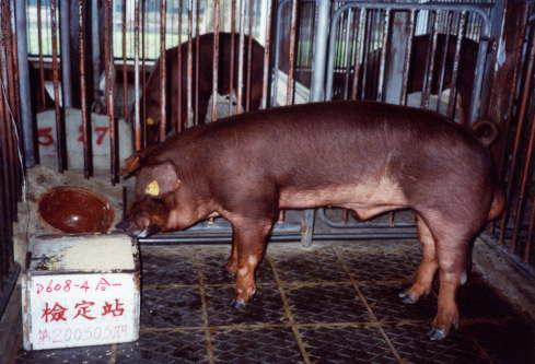 中央畜產會200303期D0608-04拍賣照片