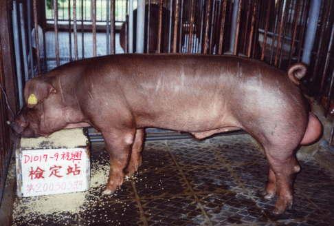 中央畜產會200303期D1017-09拍賣照片