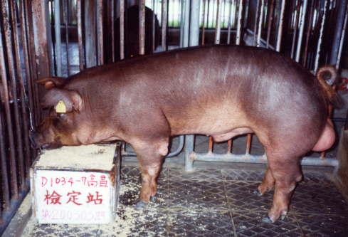 中央畜產會200303期D1034-07拍賣照片