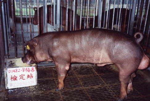中央畜產會200303期D1482-08拍賣照片