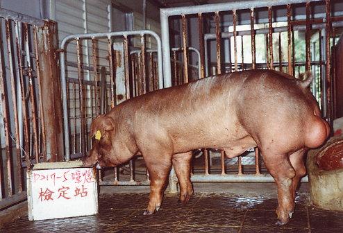 中央畜產會200305期D0217-05拍賣照片