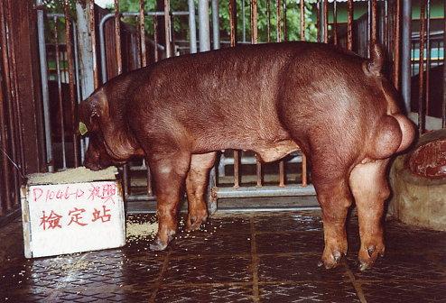 中央畜產會200305期D1046-12拍賣照片