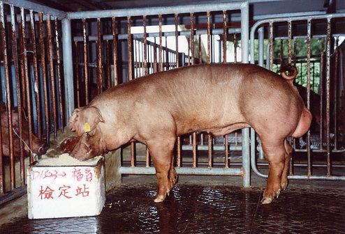 中央畜產會200305期D1523-02拍賣照片