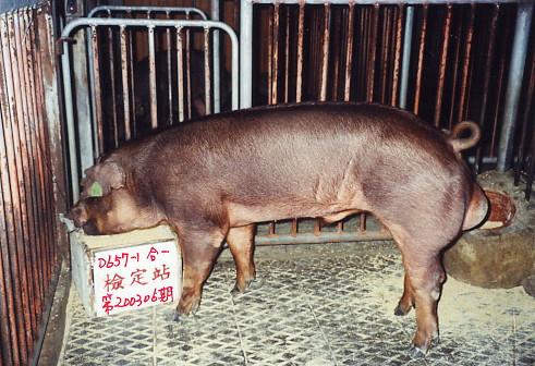 中央畜產會200306期D0657-01拍賣照片