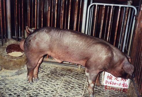 中央畜產會200306期D1630-11拍賣照片