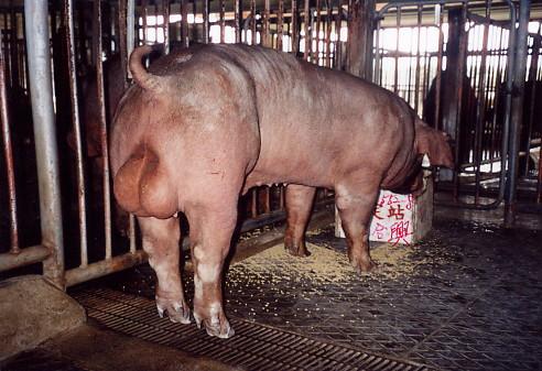 中央畜產會200307期D0552-08拍賣照片