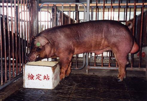 中央畜產會200307期D0552-09拍賣照片