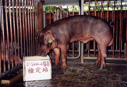 中央畜產會200307期D1604-03拍賣照片