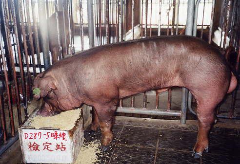 中央畜產會200309期D0287-05拍賣照片