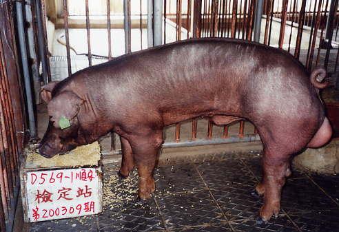 中央畜產會200309期D0569-01拍賣照片