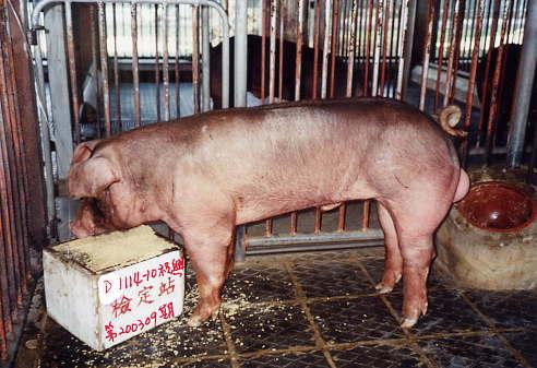 中央畜產會200309期D1114-10拍賣照片