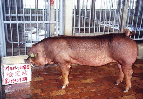 中央畜產會200309期D1656-10拍賣照片