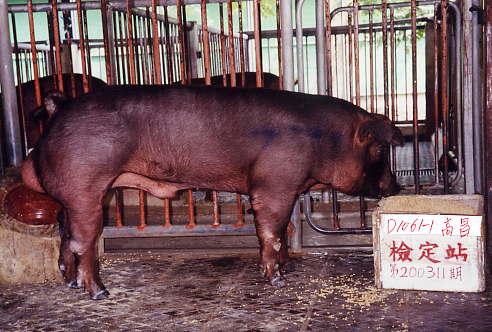 中央畜產會200311期D1061-01拍賣照片