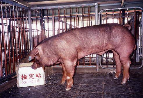 中央畜產會200311期D1148-09拍賣照片