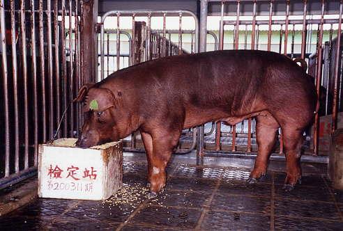 中央畜產會200311期D1688-06拍賣照片